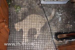 Die Katze lag leblos im Eingangsflur.