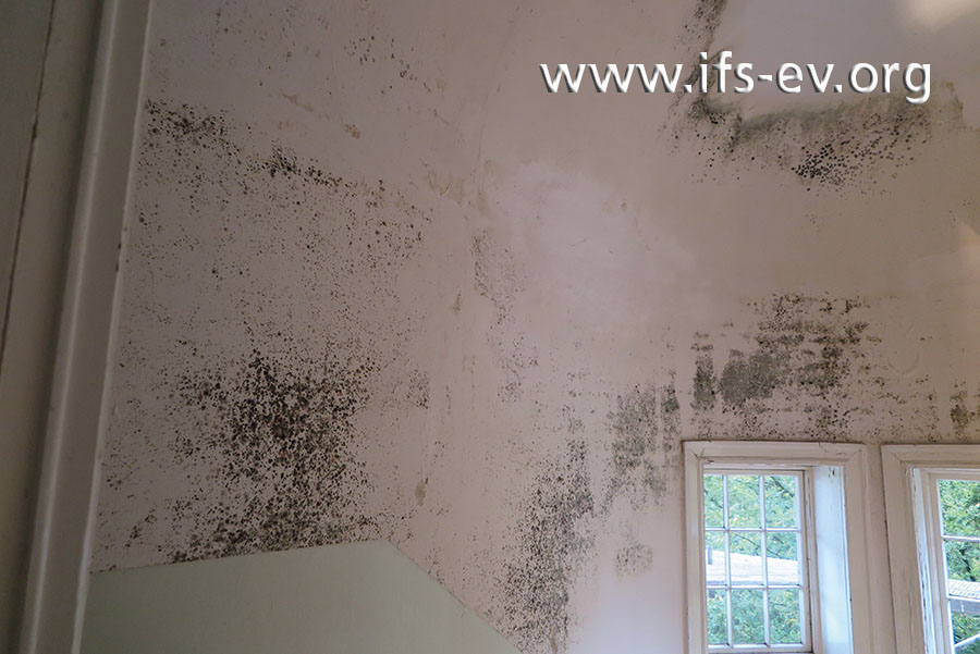 Großflächiger Schimmelbefall an den Wänden – hier wurde zu spät gehandelt.
