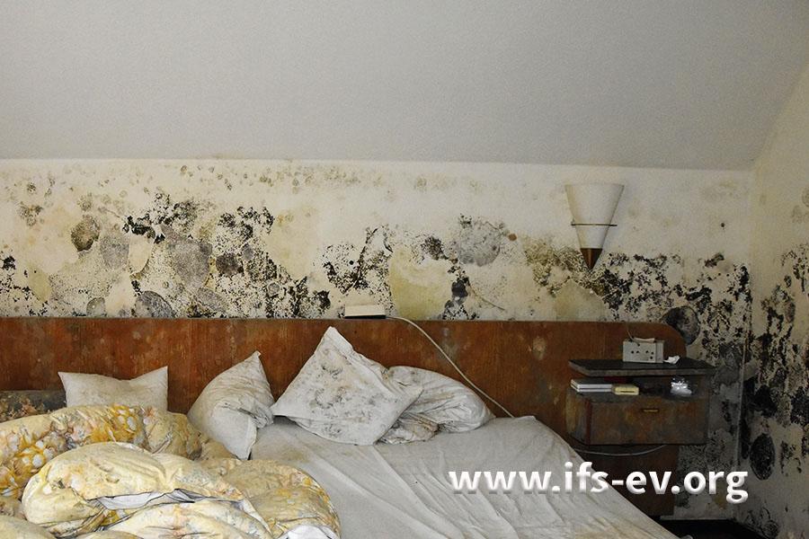 Im Schlafzimmer sind die Wände großflächig mit Schimmelpilzen bewachsen.