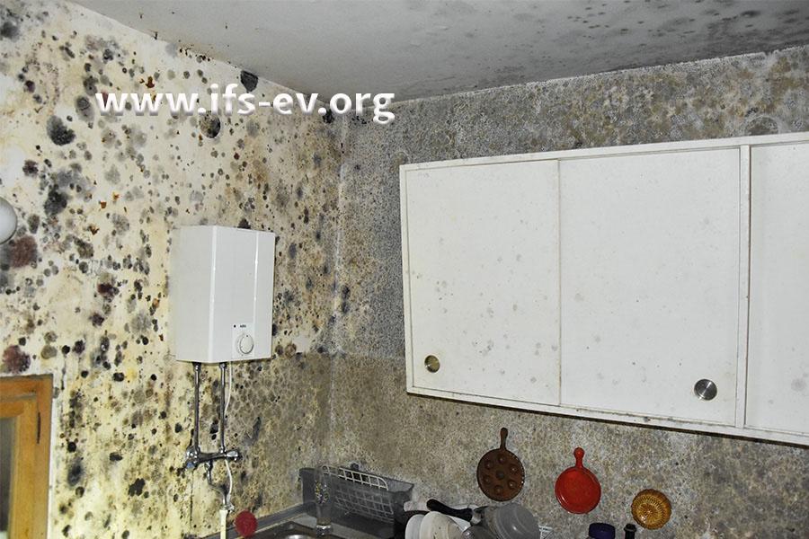 Starker Schimmelbefall auch in der Küche