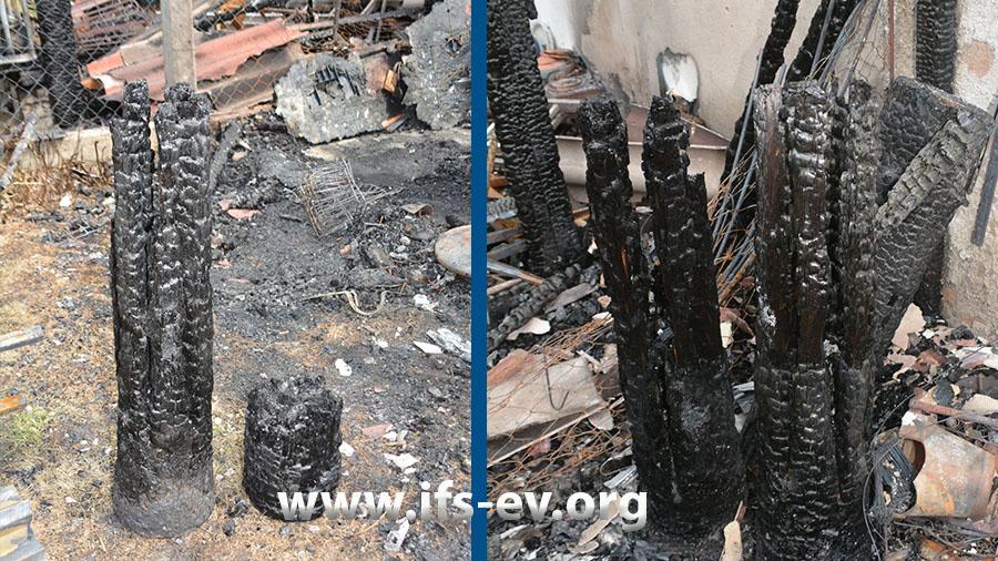 Im Brandschutt befinden sich mehrere Baumstämme; auf dem rechten Bild sind die Einschnitte deutlich zu erkennen.