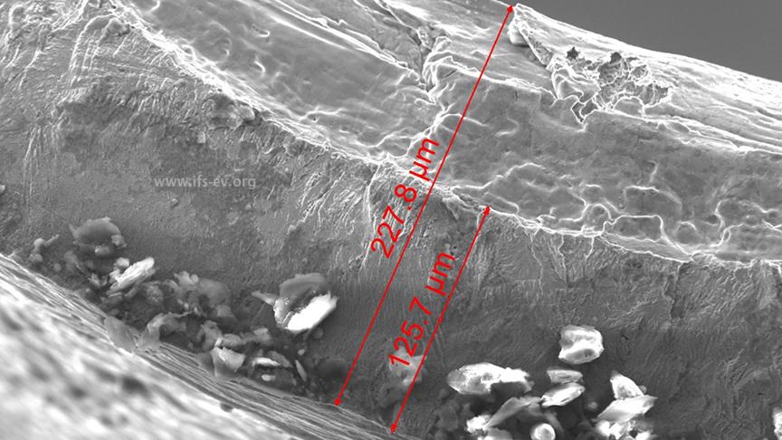 Unter dem Rasterelektronenmikroskop zeigt sich die Reduzierung der Wandstärke durch die Längsriefe um fast die Hälfte.